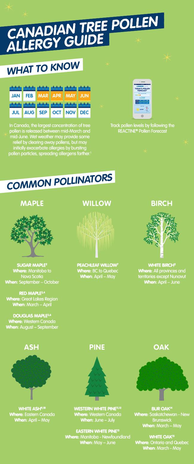 Canadian Tree Pollen - Infographic
