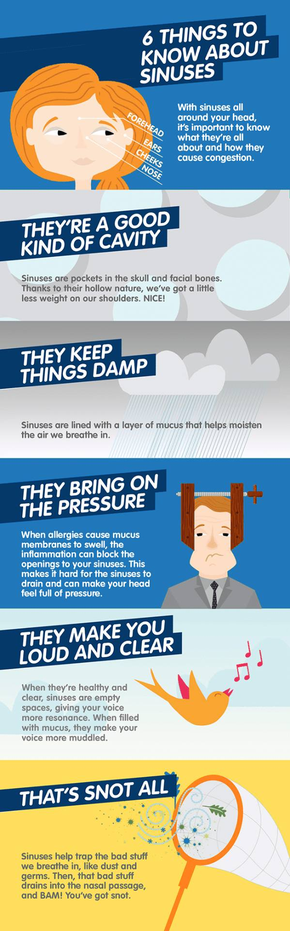 6 things about Sinuses - Infographic