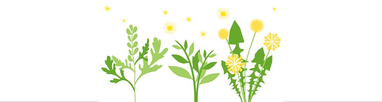 Weed Pollen Allergies