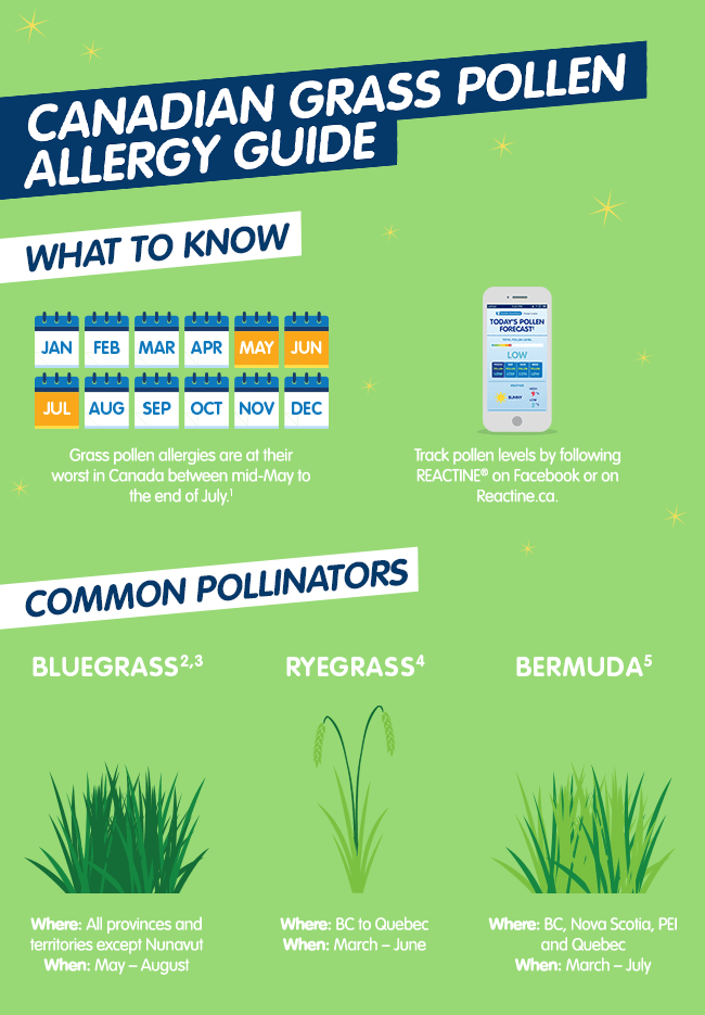 Canadian Grass Pollen Allergy Guide | REACTINE®